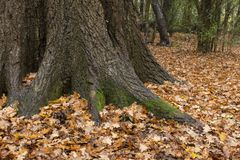 Autumn leaves on Southampton Common royalty free stock photo