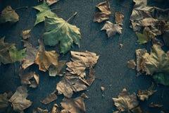 Fallen leaves on asphalt Stock Photo
