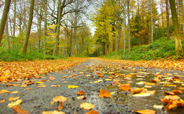 Fallen leaves in autumn Stock Photography