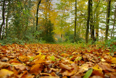 Fallen leaves in autumn Royalty Free Stock Image
