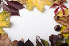 Fallen leaves of autumn backgrounds. Fallen leaves in autumn origin on the table stock photography