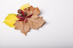 Fallen leaves of autumn backgrounds Stock Photography