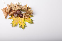 Fallen leaves of autumn backgrounds Stock Photo