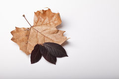 Fallen leaves of autumn backgrounds Royalty Free Stock Photo