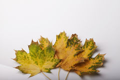 Fallen leaves of autumn backgrounds Stock Photos