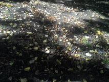 Fallen leaves. Royalty Free Stock Photos