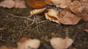 Fallen leaves in autumn forest stock video footage