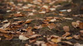 Fallen leaves in autumn forest stock video