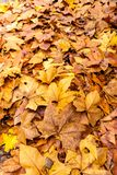 Fallen leaves in autumn forest at sunny weather.  stock photos