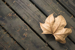 Fallen leaves at autumn Stock Photo