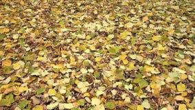 Fallen leaves stock video footage