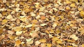 Fallen leaves stock footage