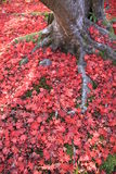 Fallen leaves in autumn, Kyoto. Royalty Free Stock Photos