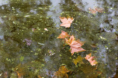 Fallen leaves in autumn Stock Image