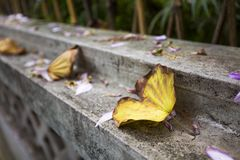 fallen leaves in autumn Royalty Free Stock Photo