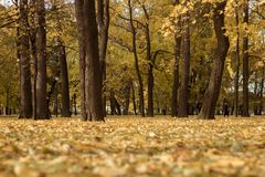 Autumn in the park. Fallen leaves in an autumn park Royalty Free Stock Images