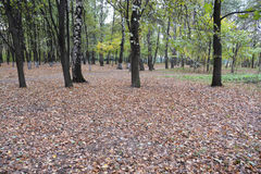 Fallen leaves in autumn Park. Royalty Free Stock Image