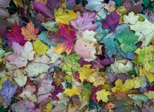 Fallen leaves at autumn stock photography