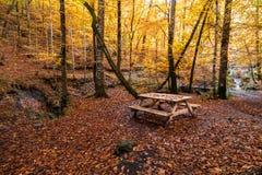 Fallen Leaves in Autumn Season Stock Photos