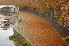 Fallen leaves in autumn on the Tiber Royalty Free Stock Image