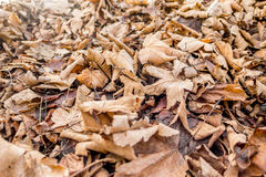 Fallen leaves in autumn Royalty Free Stock Photography