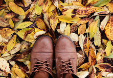 Fallen leaves of autumn Royalty Free Stock Images