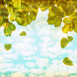 Fallen leaves background Royalty Free Stock Images