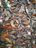 The fallen leaves. Background Stock Photos