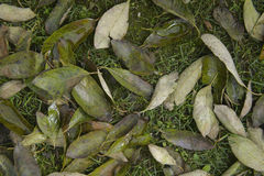 Fallen leaves background Royalty Free Stock Photos