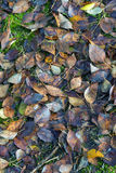 Fallen leaves background Stock Photo