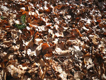 Fallen leaves background with great contrast Royalty Free Stock Images