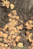 Fallen leaves Stock Image