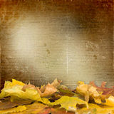 The fallen leaves on the background wall. With vintage wallpaper Stock Image