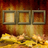 The fallen leaves on the background wall Stock Images