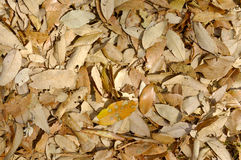 Fallen leaves. Beautiful texture of dried fallen leaves Royalty Free Stock Image