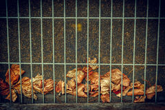 Fallen Leaves Behind Wire Grate Background Stock Images