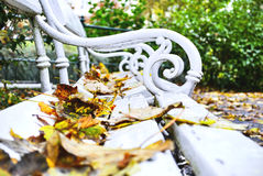 Fallen leaves on a bench in autumn Park. Stock Photo