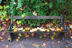 Fallen leaves on bench Stock Photography