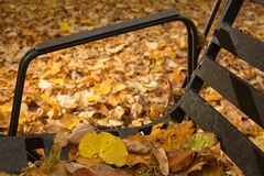Fallen leaves on black metal bench. Yellow, beige and brown leaves fallen on black metal bench, close up, background with leaves covering ground Royalty Free Stock Image