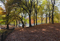 Fallen leaves on Central Park, New York. Photo shot from inside Central Park in New York Stock Image