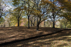 Fallen leaves on Central Park, New York. Photo shot from inside Central Park in New York Royalty Free Stock Image