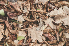Fallen leaves of chestnut, maple, oak, acacia. Brown, red, orange and gren Autumn Leaves Background. Soft colors Stock Photography