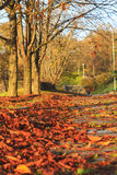 Fallen leaves in a city park on  pedestrian road Royalty Free Stock Photos