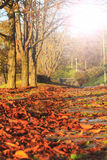 Fallen leaves in a city park on  pedestrian road with sunny hotspot Royalty Free Stock Photos