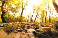 Fallen leaves. Close-up shot of fallen leaves in autumn forest Royalty Free Stock Image