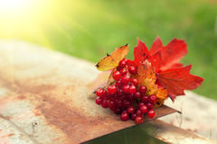 Fallen leaves and Cluster of Viburnum Royalty Free Stock Photography
