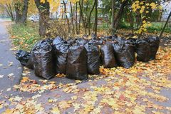 Fallen leaves, collected in black bags stock images