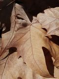 Fallen leaves. Composition with some dry fallen leaves in autumn Royalty Free Stock Photos