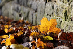 Fallen leaves at corner Royalty Free Stock Images