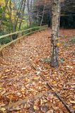 Fallen Leaves Cover Wooden Steps in a Winter Wood Stock Photography
